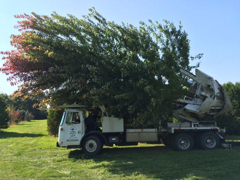 Nearly Any Tree Can Be Moved Successfully